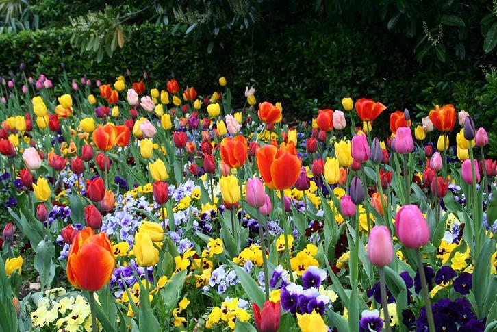 00-flores
