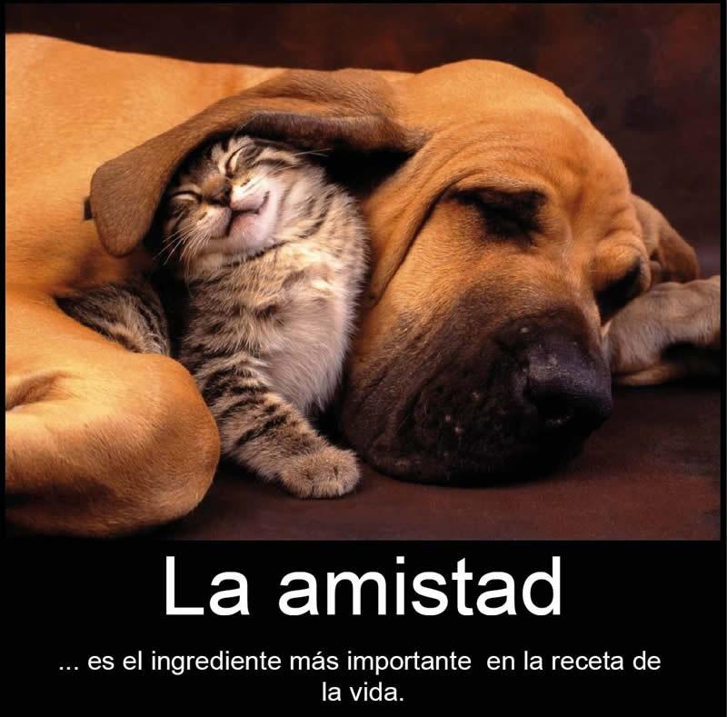 Imagenes De Amistad Imagenes Con Frases De Amistad