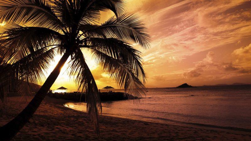 foto-playa-al-atardecer-con-palmera