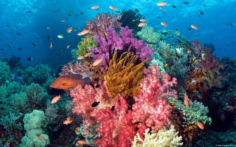 Coral en las aguas de Indonesia