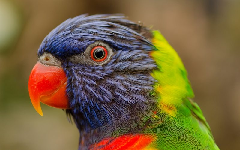 animales-tropicales-pajaros-fondos-de-pantalla