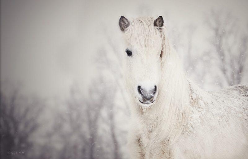 caballo-blanco-salvaje-fondos-pantalla-hd