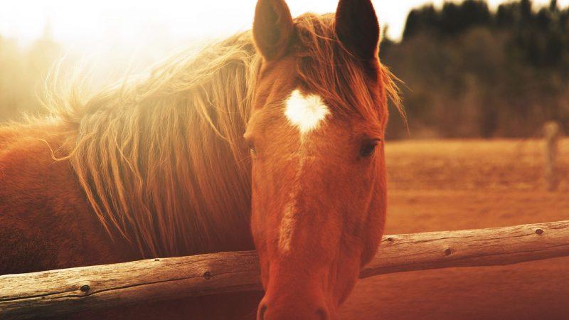 caballo-fondo-de-pantalla-hd