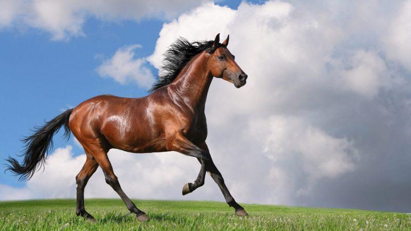 caballo-galopando-fondo-pantalla-hd