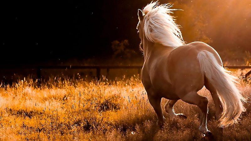 caballo-salvaje-fondo-de-pantalla-hd