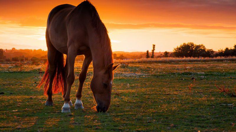 caballo-salvaje-pradera-fondo-hd