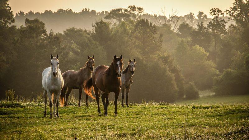 caballos-salvajes-fondos-de-pantalla-gratis