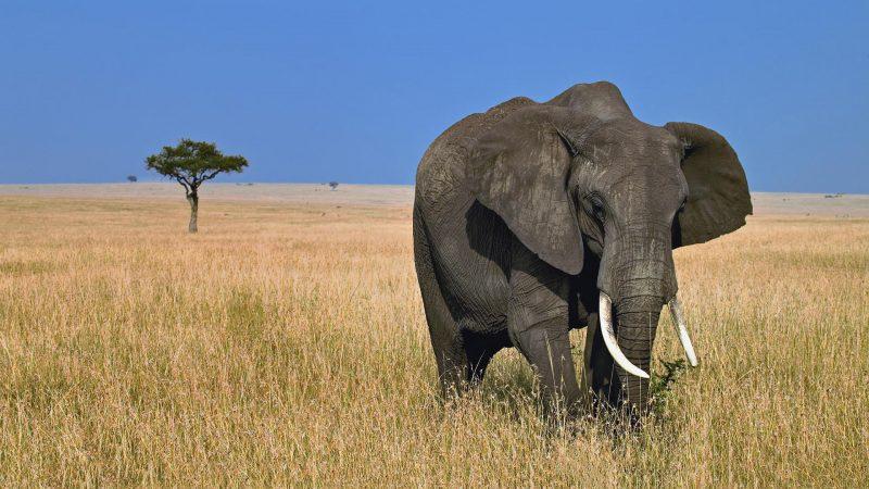 elefantes-africanos-fondos-hd