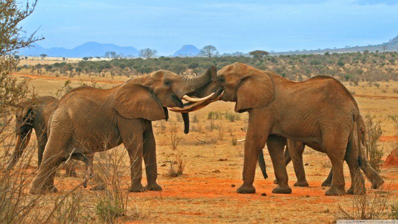 elefantes-fondos-de-pantalla-hd