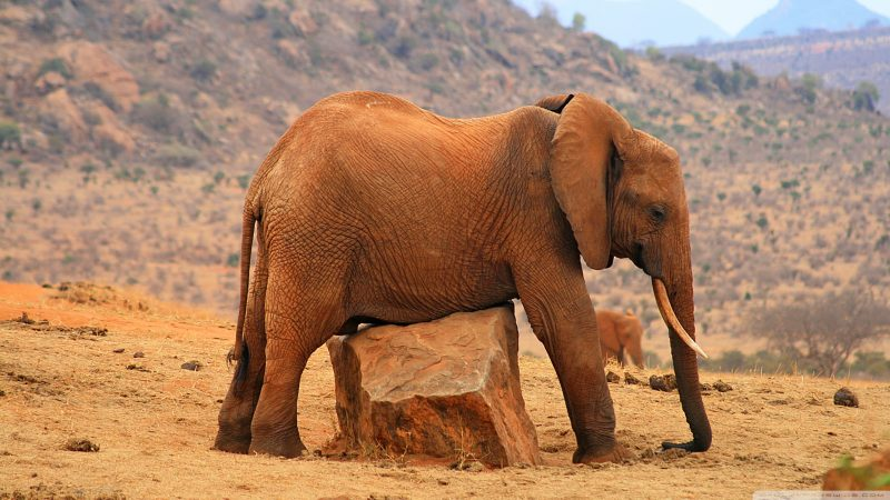 Fondos De Pantalla De Animales Bebes: Fondos De Pantalla Animales Salvajes, Wallpapers Hd