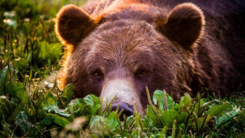 fondos-de-pantalla-osos