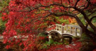 fondos otoño gratis