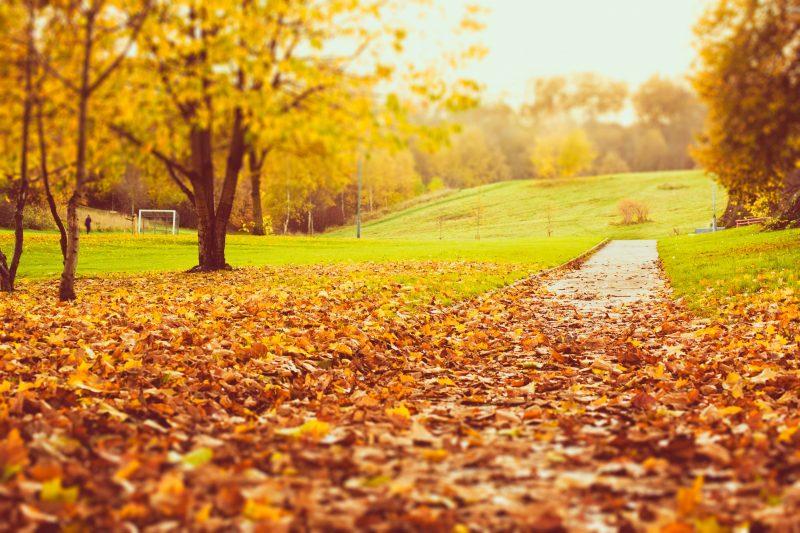 Fondos oto o wallpapers autumn fondos de pantalla de oto o - Descargar autumn leaves ...