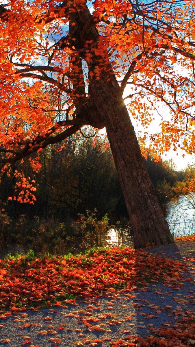 fondos-otoño-wallpapers-movil