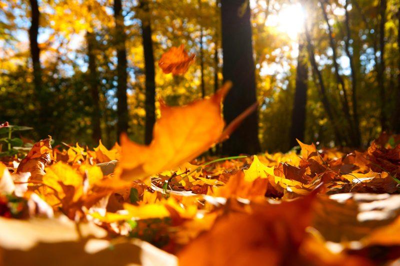fotos-de-otoño-gratis