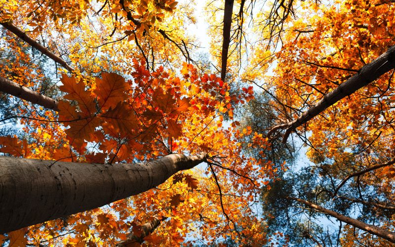 fotos-otoño-walpapers-hd