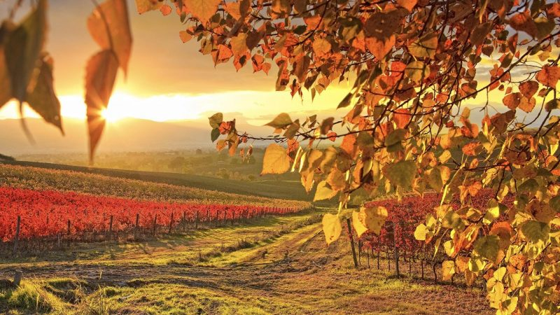 fotos-paisajes-de-otoño-gratis