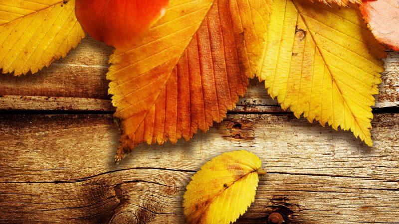hojas-de-otoño-para-fondos-de-pantalla-hd