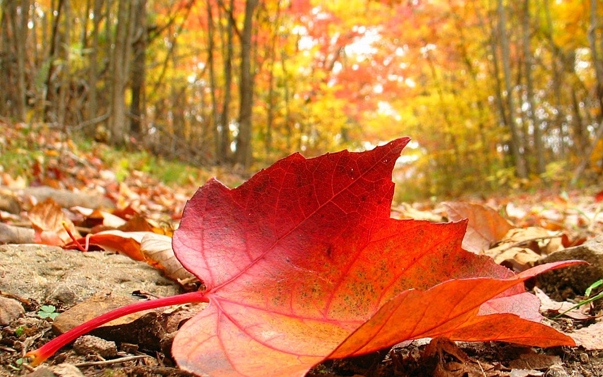 Fondos oto o wallpapers autumn fondos de pantalla de oto o - Imagenes paisajes otonales ...