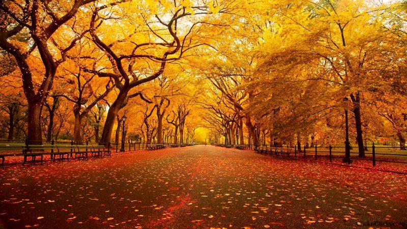 imagenes-de-otoño-hd-gratis