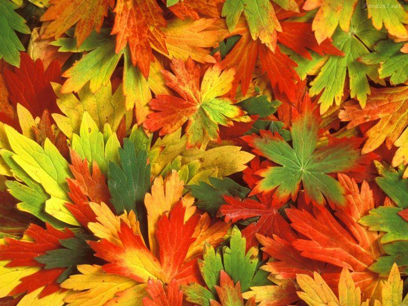 Fondos oto o wallpapers autumn fondos de pantalla de oto o for Immagini autunno hd