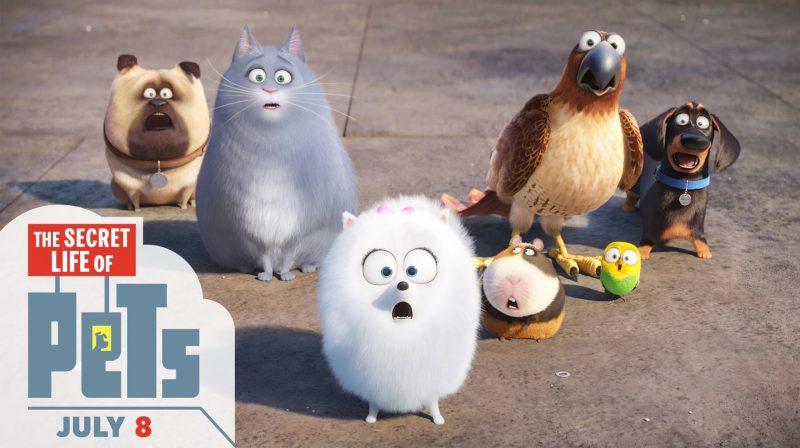 mascotas-fondos-hd-gratis