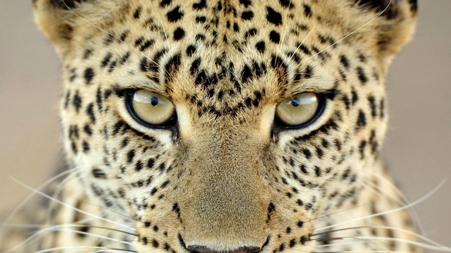 Fondos Animados Para Celular De Animales: Fondos De Pantalla Animales Salvajes, Wallpapers Hd