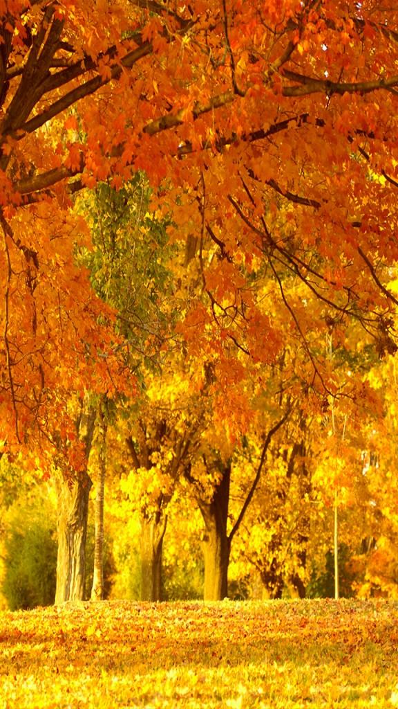 otoño-android