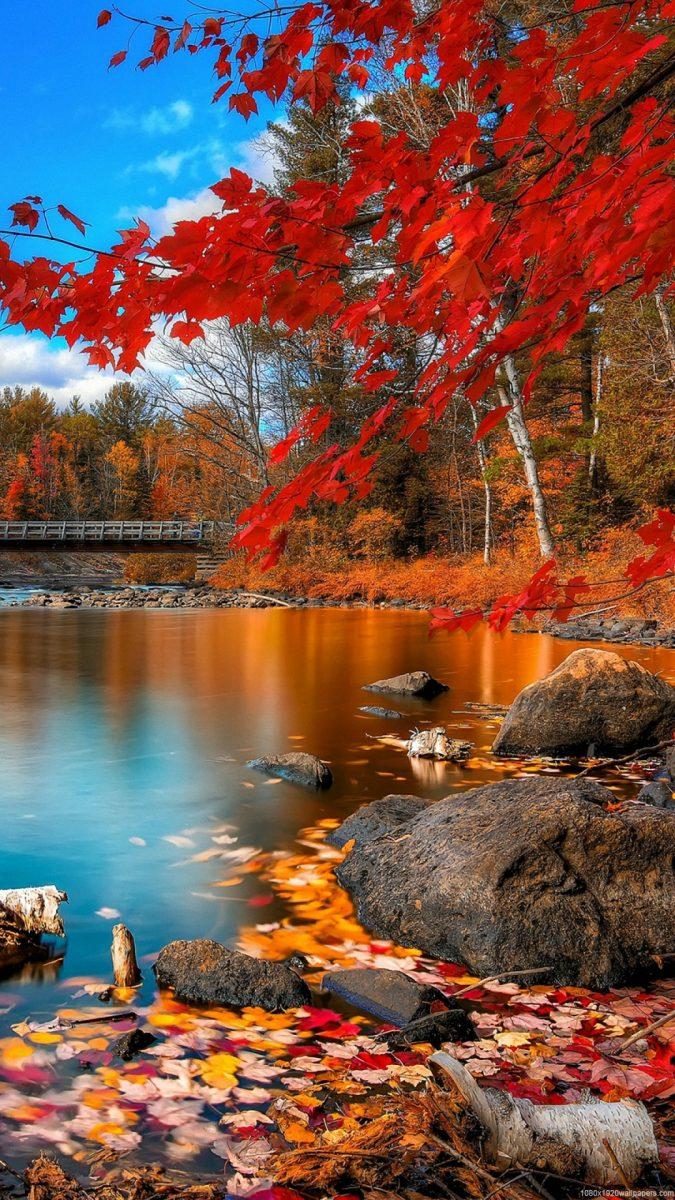 otoño-fondos-hd-movil