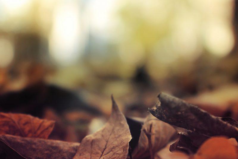otoño-fondos-naturaleza-wallpapers-gratis