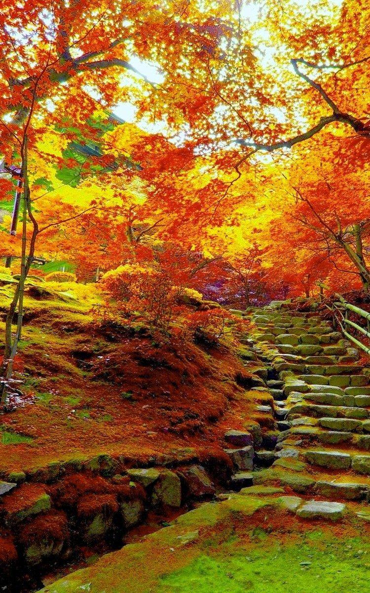 otoño-movil