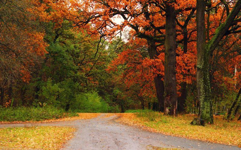 otoño-naturaleza-fondos
