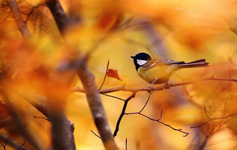 otoño-pajaros-arboles-fondos