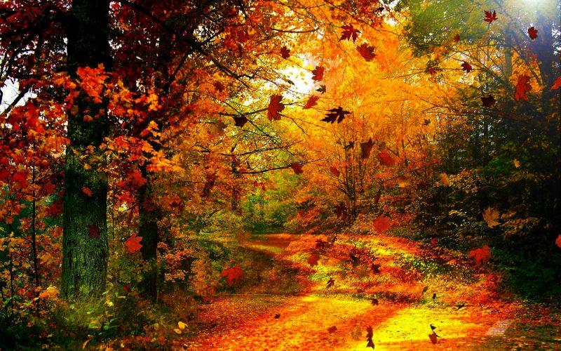 otoño-wallpapers