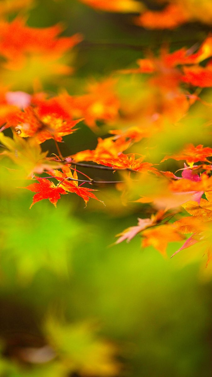 otoño-wallpapers-hd-movil