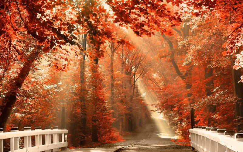 paisajes-de-otoño-bonitos-fondos-hd