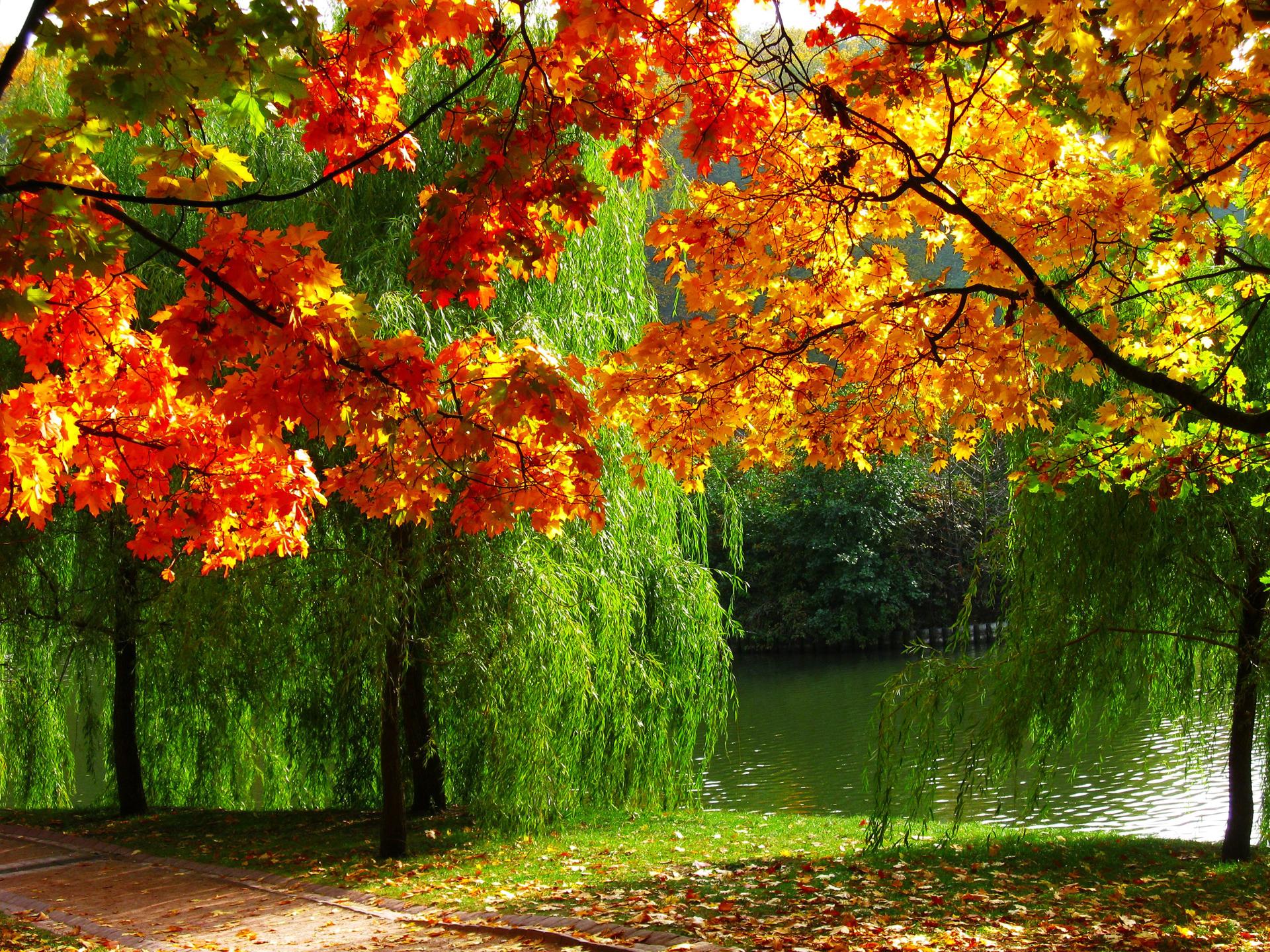 fondos oto241o wallpapers autumn fondos de pantalla de oto241o