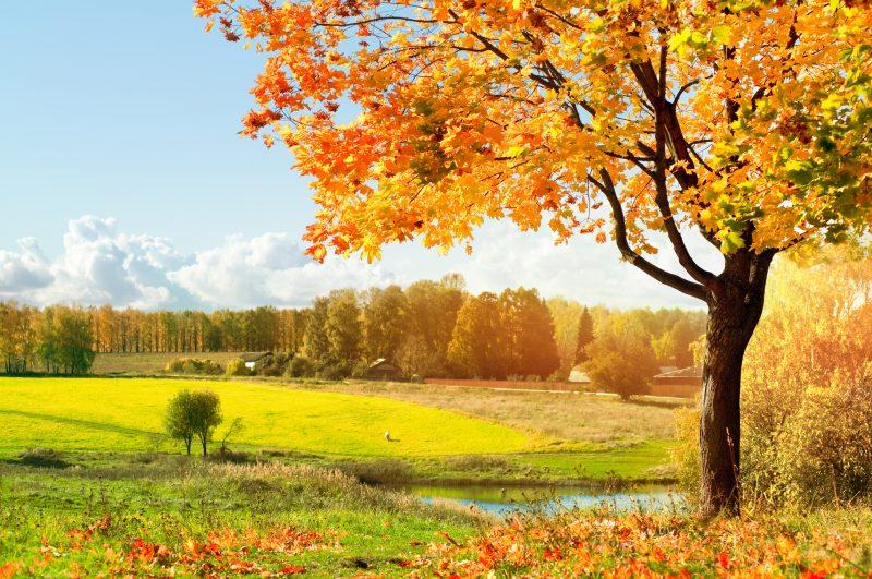 paisajes-otoño-fondos-hd