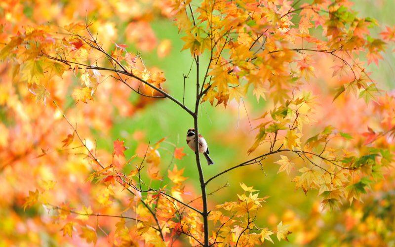 pajaro-rama-otoño-fondos-hd