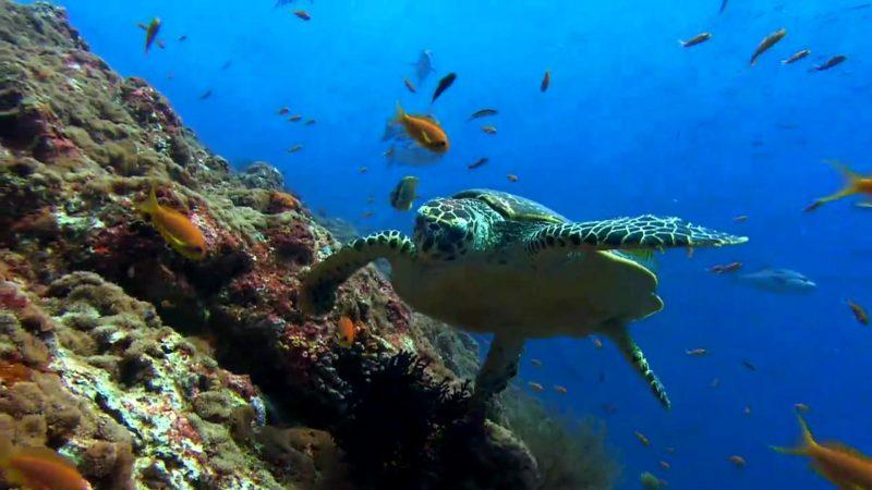 tortugas-marinas-fondos-hd
