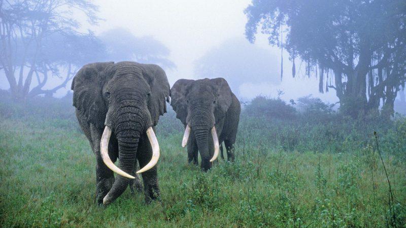 wallpapers-elefantes-fondos-gratis