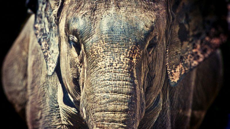 wallpapers-elefantes-fondos-pantalla-hd