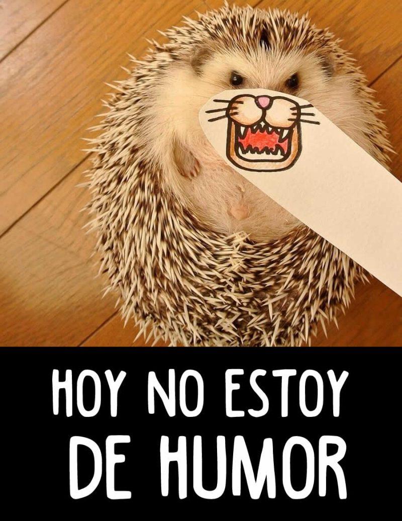 imagenes-chistosas-y-graciosas-10