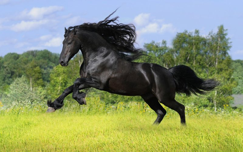 caballo-arabe-wallpaper