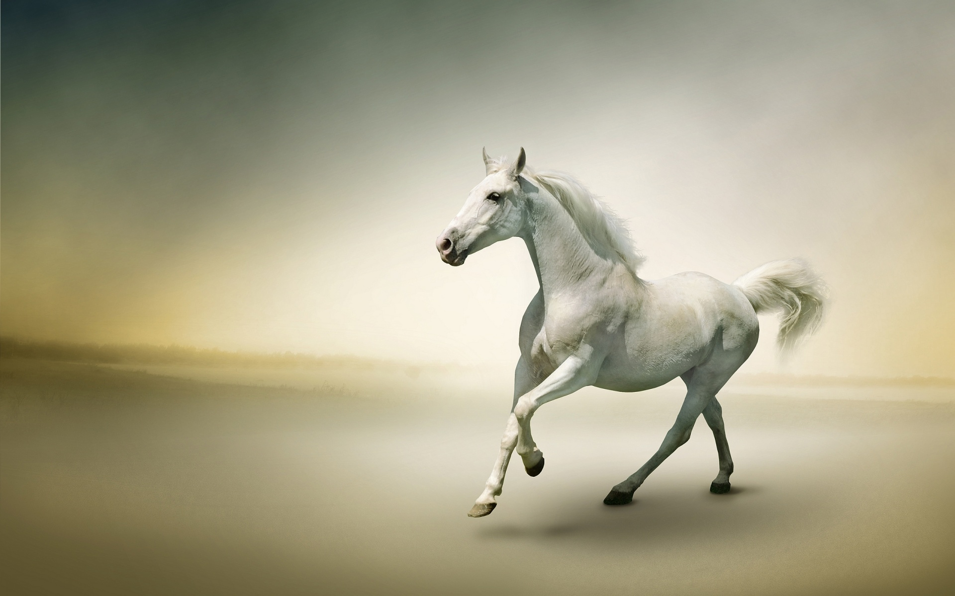 horse hd wallpapers for pc