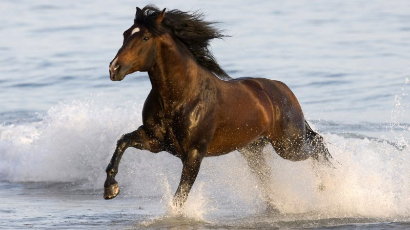 caballo-al-galope-wallpaper
