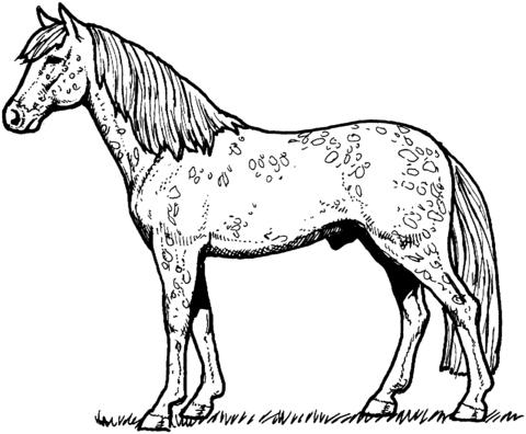 caballo-de-raza