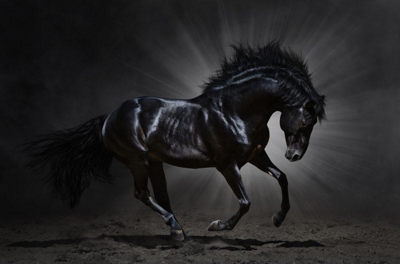 caballo-negro-salvaje-fondos-hd