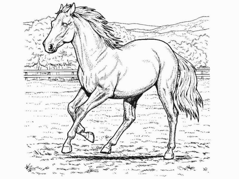 caballo-para-colorear