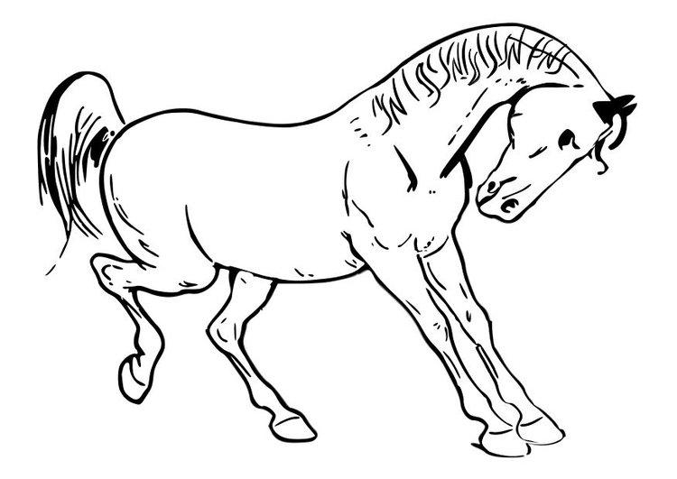 caballo-salvaje-para-pintar